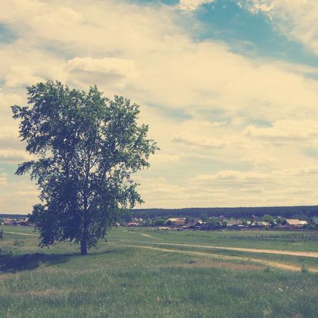 hause: Rural summer landscape filtred image