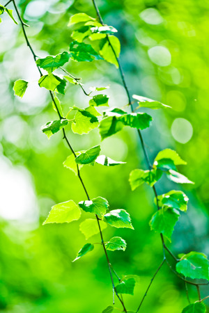 shallow  focus: green leaves, shallow focus