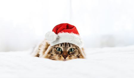 weihnachtsmann lustig: christmas cat in red Santa Claus hat Lizenzfreie Bilder