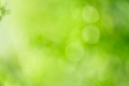 Fresh healthy green bio background with abstract blurred foliage   Imagens