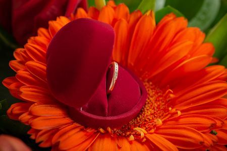 Engagement ring in red box on gerbera flower