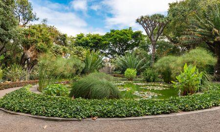 Botanical garden of Puerto de la Cruz, Tenerife, Spain  Фото со стока