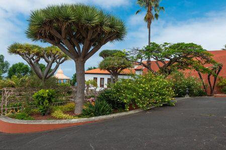 Park near Liceo de Taoro, La Orotava, Tenerife, Spain Фото со стока
