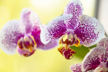 Orchid flower in tropical garden