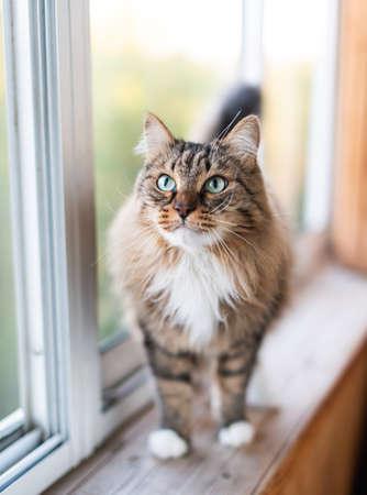 cat stand on a windowsill