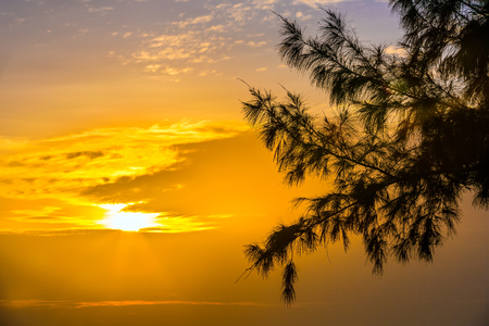 Silhouette of a tree branch on the sunset. Hainan, China. The sun gives the last rays to the orange sky.