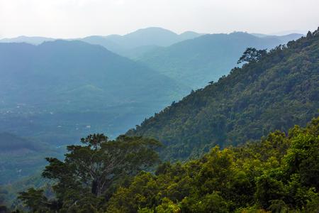 Slope of the rainforest. Yanoda Rain Forest. Hainan, China. Stock Photo