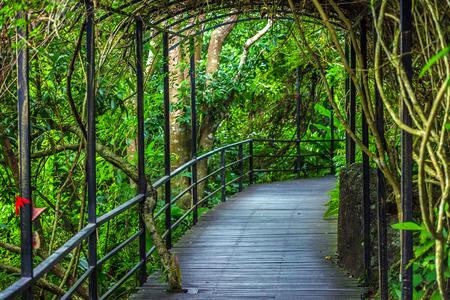 Tunnel in het regenwoud. Yanoda Rain Forest. Hainan, China.