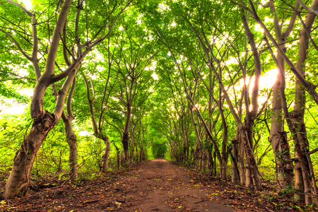 Tropical forest road, in the rays of the orange sun. Forest of the Gili Trawangan, Indonesia.