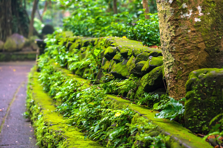 A colorful stone green yellow wall, overgrown with moss, branches of a bush with leaves sprout from cracks. Copy space for text. Landscape of Monkey Forest, Ubud, Bali, Indonesia. Stock Photo
