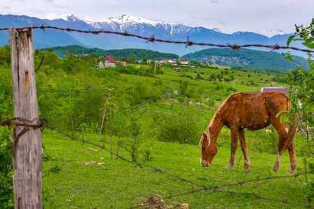 A brown worn-out horse graze behind a fence with a barbed wire on a bright green meadow at the countryside. Rural landscape in the background of mountains.