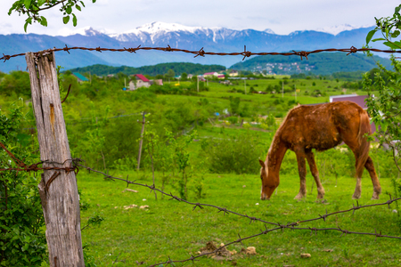 An old fence made of wood with rusty barbed wire with bent nails against the background of a brown horse in a bright green meadow at the countryside. Rural landscape in the background of mountains.