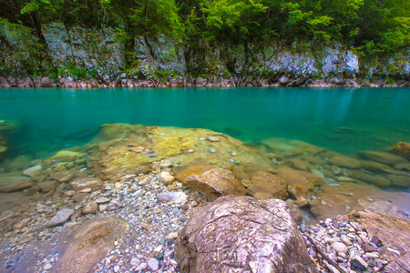 Background of green trees of the forest. Tara River Canyon, Durmitor National Park, Montenegro.