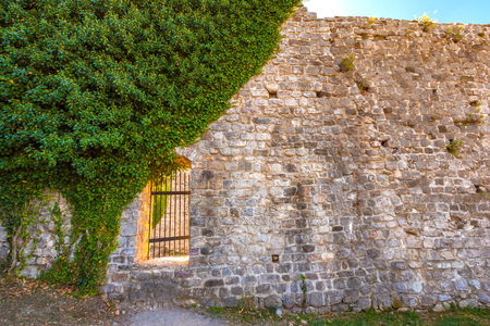 An ancient stone wall of gray brown yellow color with a metal wicket door, tree ivy plants with leaves growing on the wall cover half. Banque d'images