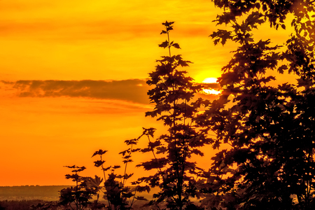 Silhouette of leaves of a bush against the background of a cloud on a brightly colorful orange sky hiding the yellow sun over the black steppe plain. 版權商用圖片