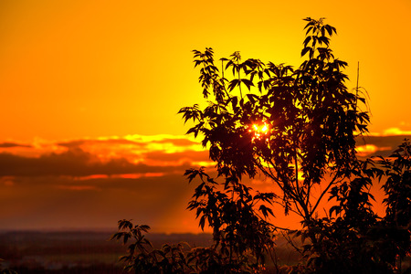 Dark orange sunset or sunrise, the rays of the sun hidden behind the clouds make their way through the silhouette of tree branches. 版權商用圖片