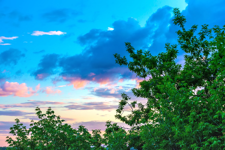 Green leaves on the branches of trees on the background of an amazing sky with multicolored clouds with yellow blue purple colors in the evening at sunset. 版權商用圖片