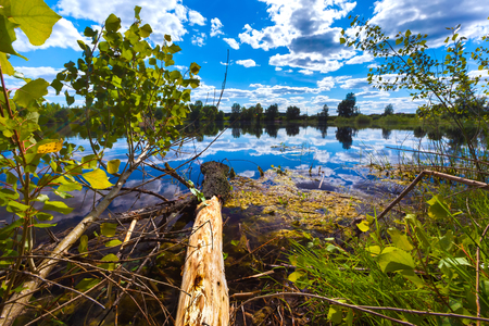 A fallen tree on the shore of a forest lake with peeling bark, a colorful reflection of a blue sky with white clouds on the calm water surface. 写真素材