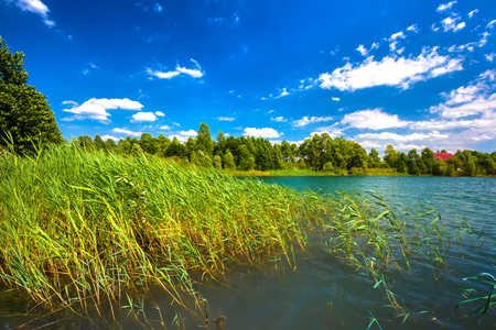 Summer daytime landscape on a lake with grassy thickets on the shore, close-up turquoise water, against the colorful coastline of green trees and a bright blue sky.