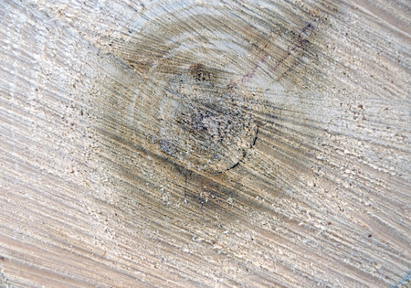 wood cut: Saw cut wood