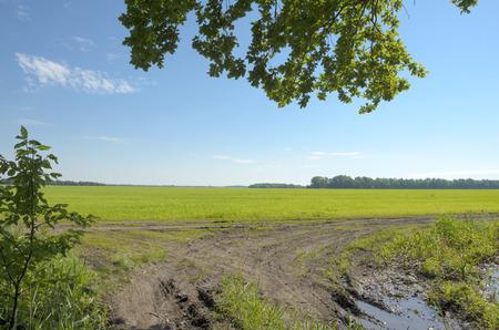 countryside landscape: countryside landscape