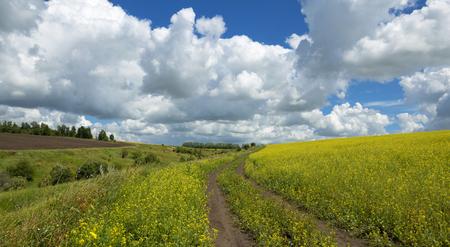 rapaseed: countryside road Stock Photo
