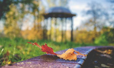 rotunda: autumn scene