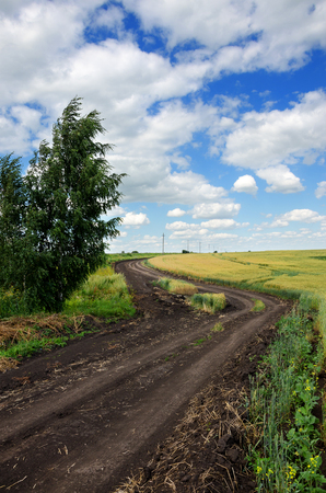 Sunny summer landscape with dirt rural road.Traveling through the countryside.Wheat field.Tula region, Russia. Stock Photo