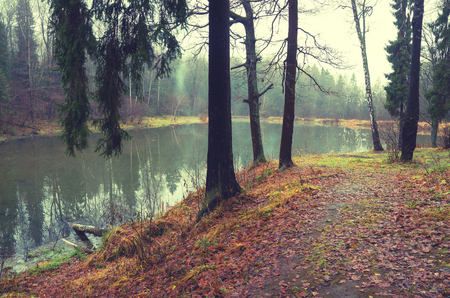 Late autumn.November.Foggy dark forest.