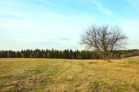 Springtime.Empty field with lonely growing bare tree.Gentle soft blue color of sky at sunset.Countryside landscape.Moscow region, Russia.