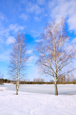Springtime.Sunny landscape with two birch trees growing on the bank of the frozen pond.Melting snow and ice.White clouds in the spring blue sky.March.Moscow region, Russia.