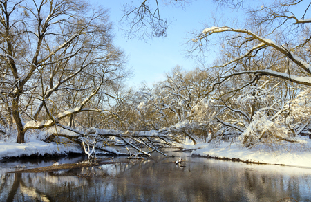 Frosty winter landscape with river.Snow covered trees on the riverbank.Cold sunny morning.Nature after heavy snowfall.Snowy fairy tale.River Konchura in Moscow region, Russia.