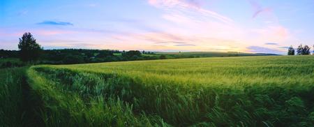 Panoramic summer landscape at sunset. Focus on a foreground. Reklamní fotografie