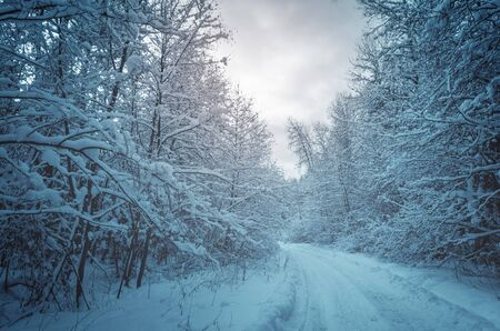 Landscape with empty forest road and snow covered trees after heavy snowfall.