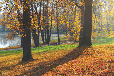 Beautiful autumn calm nature landscape.Sunny autumn scene with bare trees and land covered by orange and red leaves in empty park.Concept of beauty of autumn nature. Foto de archivo