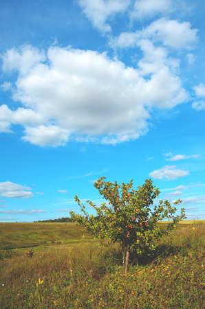 Sunny summer rural scene with wild growing apple tree Foto de archivo