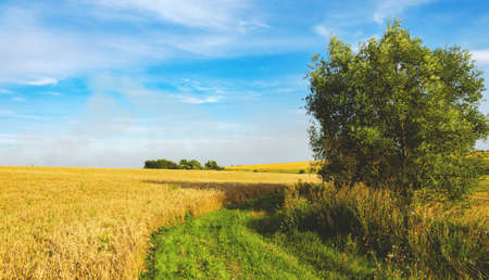 Beautiful rural road nature landscape.Sunny view of rural road and golden wheat fields with trees on a background.Warm colors nature sunset scene.Beauty of late summer or early autumn nature. Foto de archivo