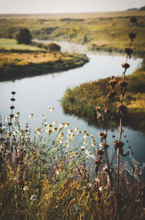 Sunny summer rural scene with wild daisy flowers on a foreground and river bend on a background at sunrise Foto de archivo