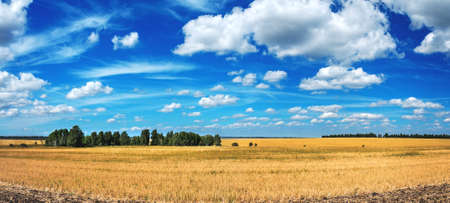 Summer rural landscape with beautiful blue sky over the golden farm fields. Standard-Bild
