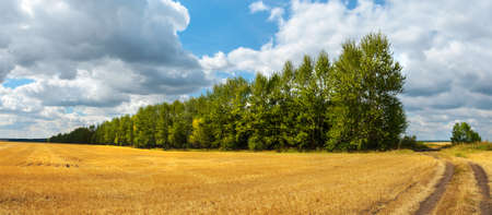 Summer rural landscape with beautiful blue sky over the golden farm fields and trees