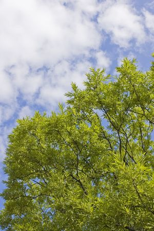 Segment of the tree crown on blue sky Stock Photo - 5870230