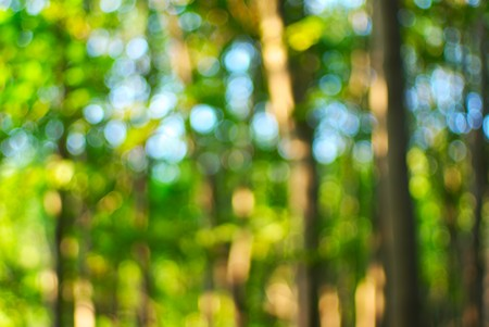 defocused forest background