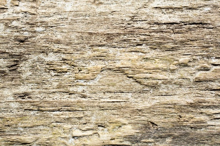 Texture of old wood, not seamless