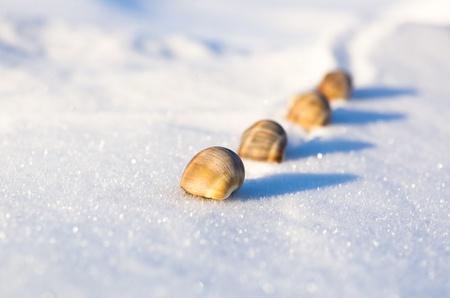 a few seashells on the snowy wilderness stubbornly creeping, dof