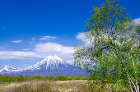 Volcanic landscape with a young tree in early spring, Kamchatka, Russia