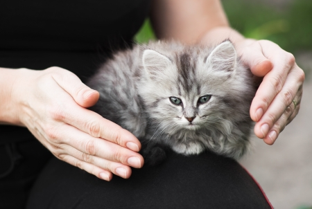 one-month kitten sits on the knee of a woman; gesture of protection