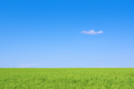 under blue skies stretched the field with green grass Stock Photo
