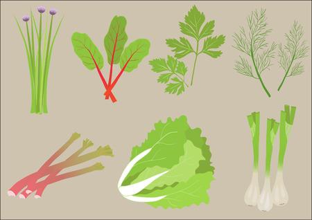 rhubarb: Fresh Greens Illustration
