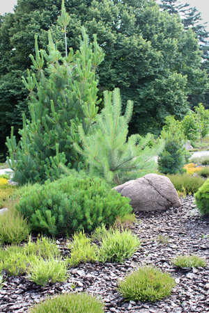bark mulch: Alpine garden, arrangement of coniferous and heather