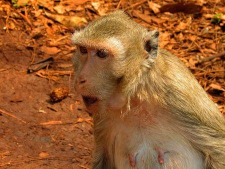 Angry Green Monkey photo